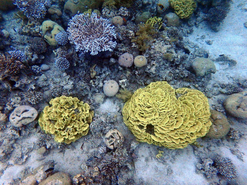 Read more about the article Exploration des récifs coraliens de la mer rouge